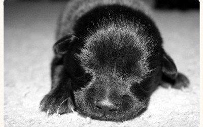 Pediatría canina: El perrito y su primer año de vida