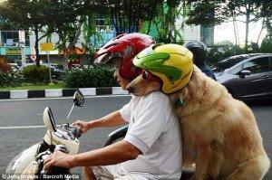 Ace y Armani en su moto