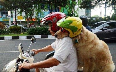Ace y Armani, los perros más motorizados del mundo