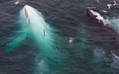 Descubren la ballena blanca que inspiró Moby Dick. Vídeo