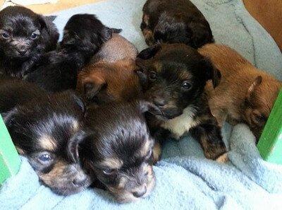 Ayuda. Roban cuatro cachorros de una protectora