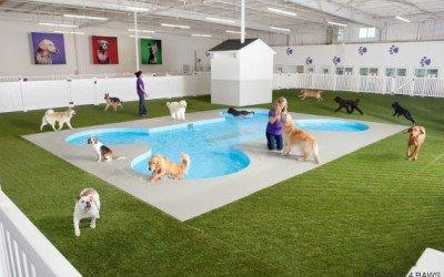 El Arca: Primer aeropuerto para animales del mundo, en Nueva York