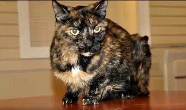 Una gata sobrevive tras estar sumergida en un barco hundido