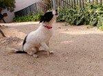 Manchitas: Una perrita ciega, perdida o abandonada?