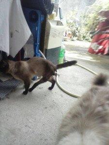 Pataco, recogido de una colonia y con poca movilidad en sus patas por un atropello