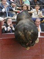 Un toro salta los burladeros y embiste al presidente de la asociacion de corridas de toros en Bayona