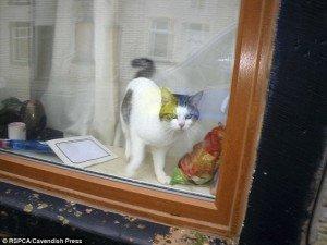 gato 1 Sheridan