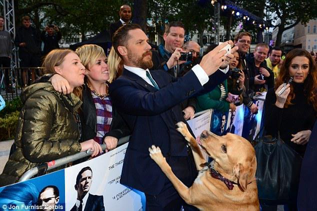 """El perro labrador de Tom Hardy,  protagonista del estreno de """"Legend"""" en Londres"""