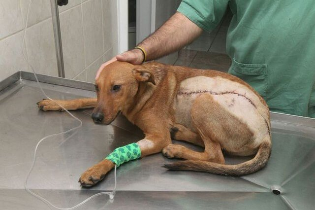 Se busca al agresor de un perro que recibió una puñalada de 40 centímetros
