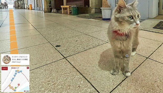 Cat Street View: Nace el Google Maps para gatos
