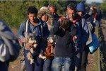 De Siria, no sólo escapan humanos