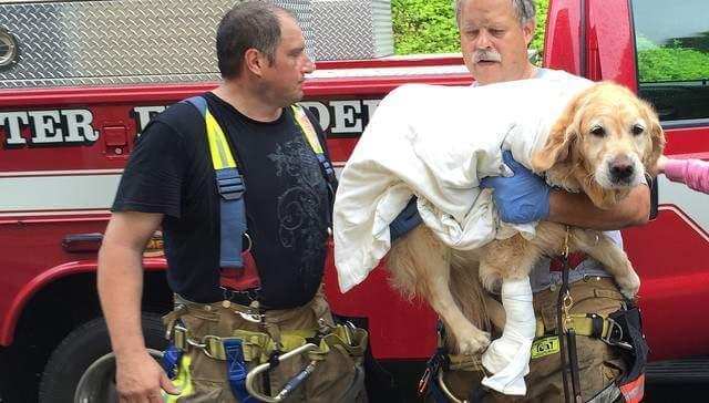Un perro se lanza contra autobús para proteger a su humana