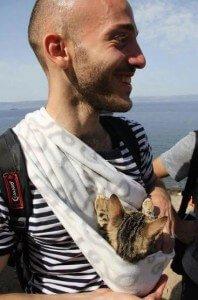 gatito-refugiado