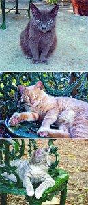 Gatos del Museo Hemingway