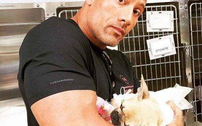 El perro de Dwayne Johnson fallece tras ingerir setas venenosas mientras jugaba en el jardín