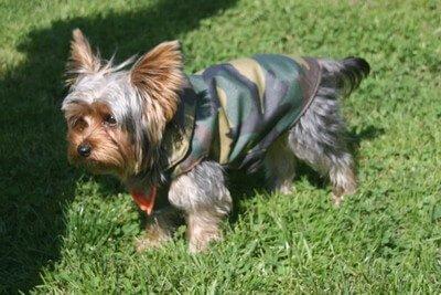 Traje para perros de CocoDiseño. Modelo Camuflaje