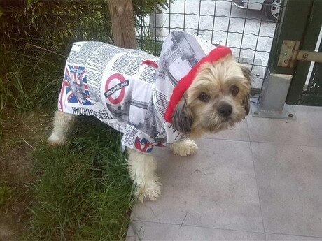 Traje para perros de CocoDiseño. Modelo Paper News