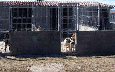A juicio una ex edil y cuatro empleados municipales por la muerte masiva de perros en Orense