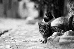 Deportaciones de gatos callejeros en Israel para cancelar el gasto en esterilizaciones