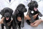 El mayor centro de clonación de mascotas para particulares ya es una realidad