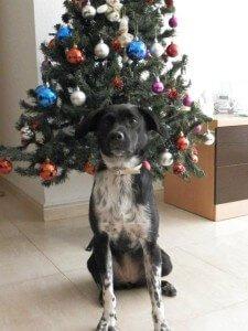 KIRA Concurso Navidad