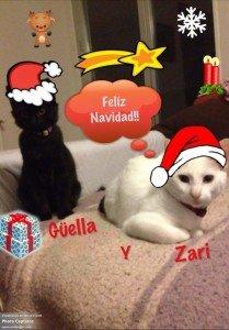 ZARI Y GUELLA Concurso Navidad