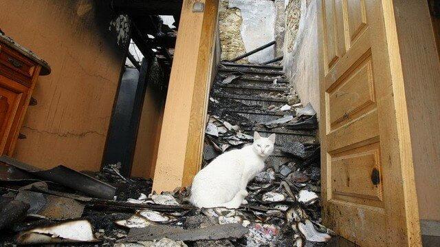 Localizan una nonagenaria desaparecida gracias a sus gatos