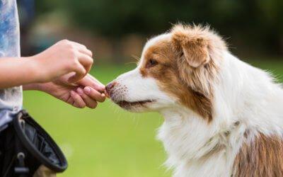 Técnicas de adiestramiento básicas para perros: Guía Completa 2019